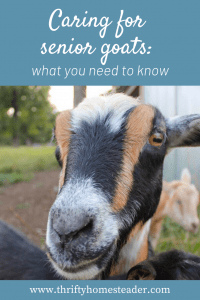 caring for senior goats
