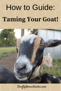 how to guide taming your goat pinterest