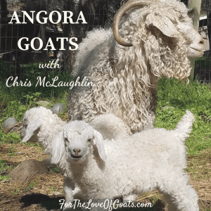 Mother and baby Angora goats