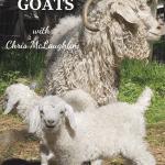 mother and babies angora goats