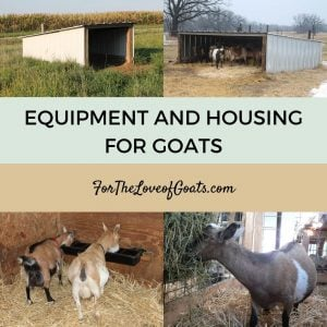 Equipment and Housing for Goats