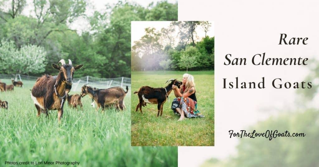 island goats