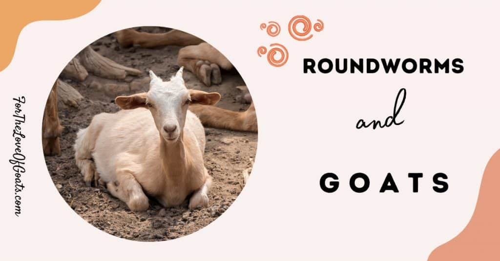 roundworms and goats