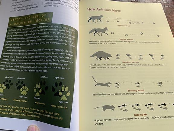 drawings of predator tracks