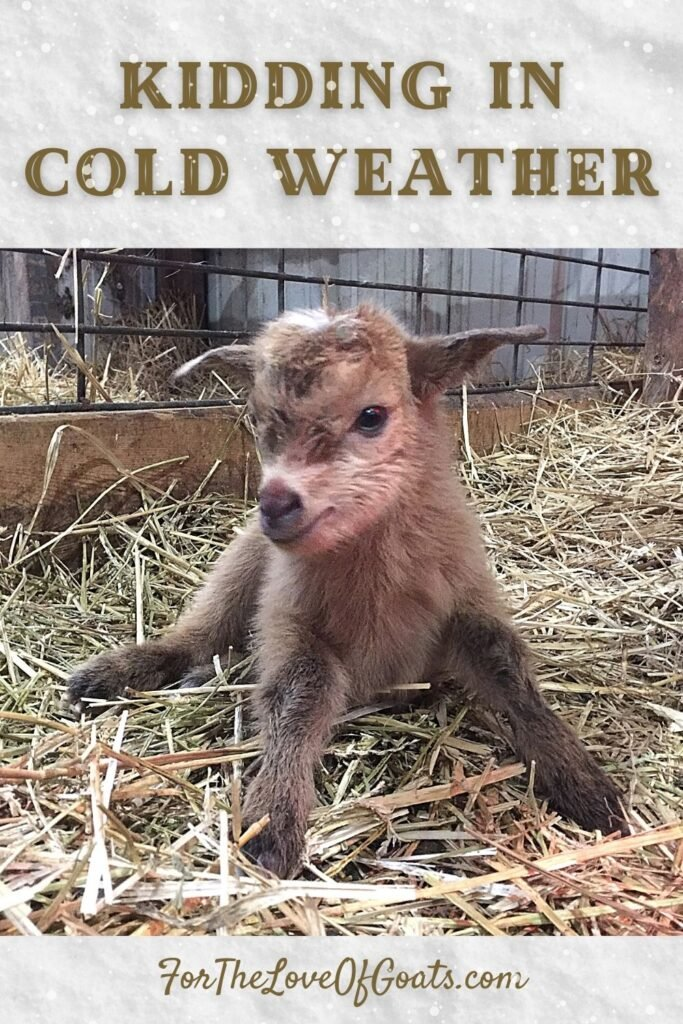 Kidding in Cold Weather