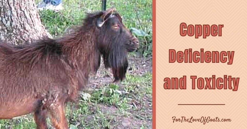 copper deficient goat