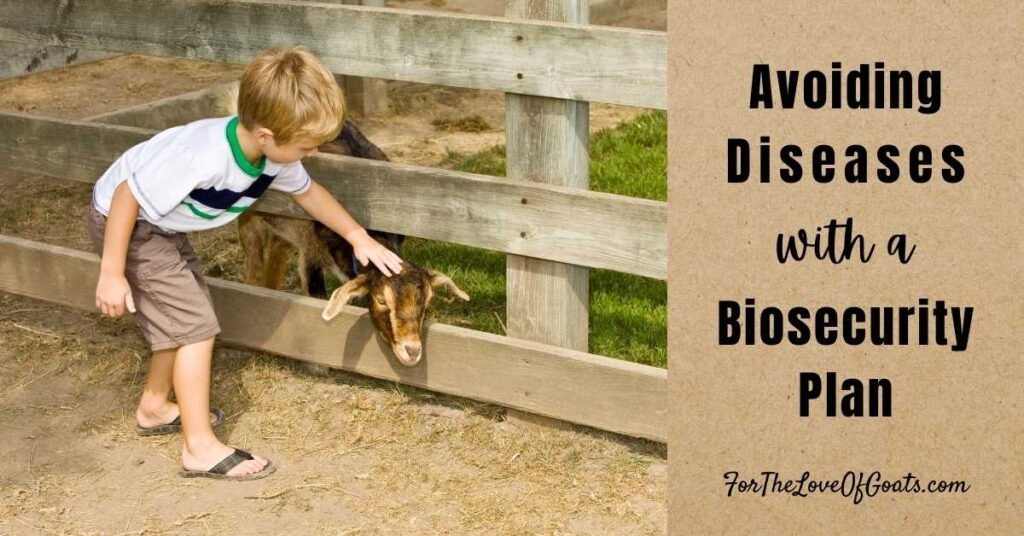 boy petting a goat