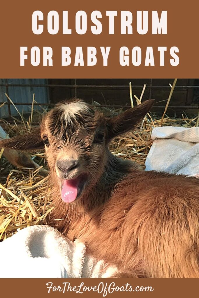 Colostrum for Baby Goats pin graphic
