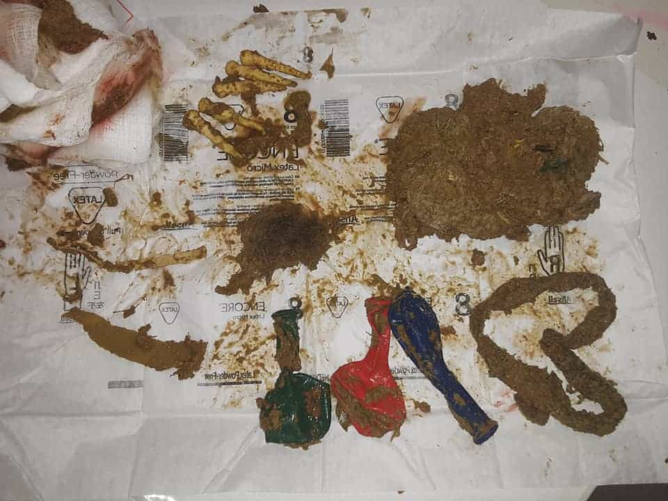 items removed from goat rumen during surgery