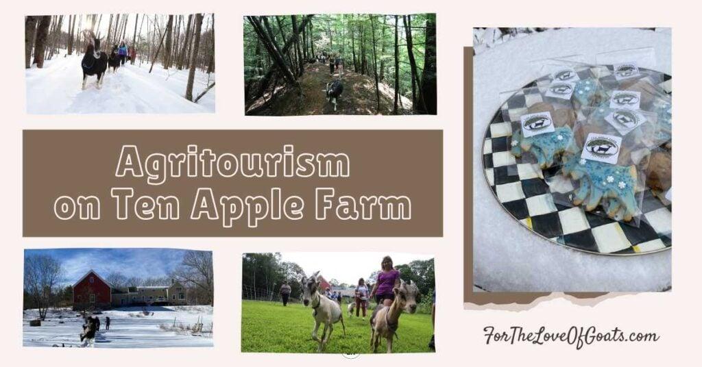 Agritourism on Ten Apple Farm