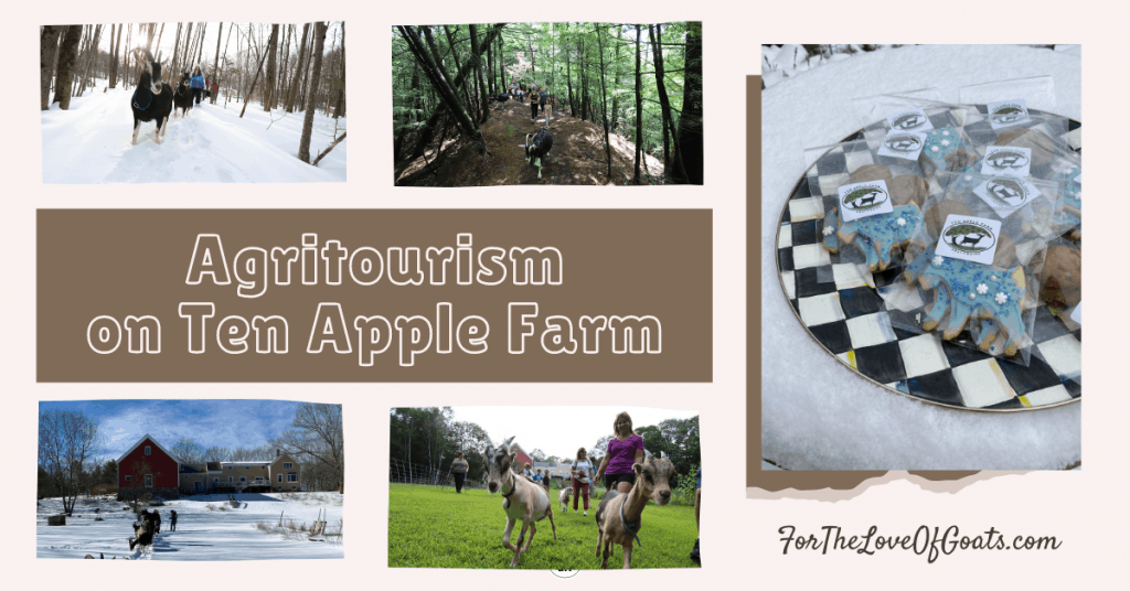 Agritourism on Ten Apple Farm