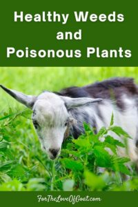 Healthy Weeds and Poisonous Plants