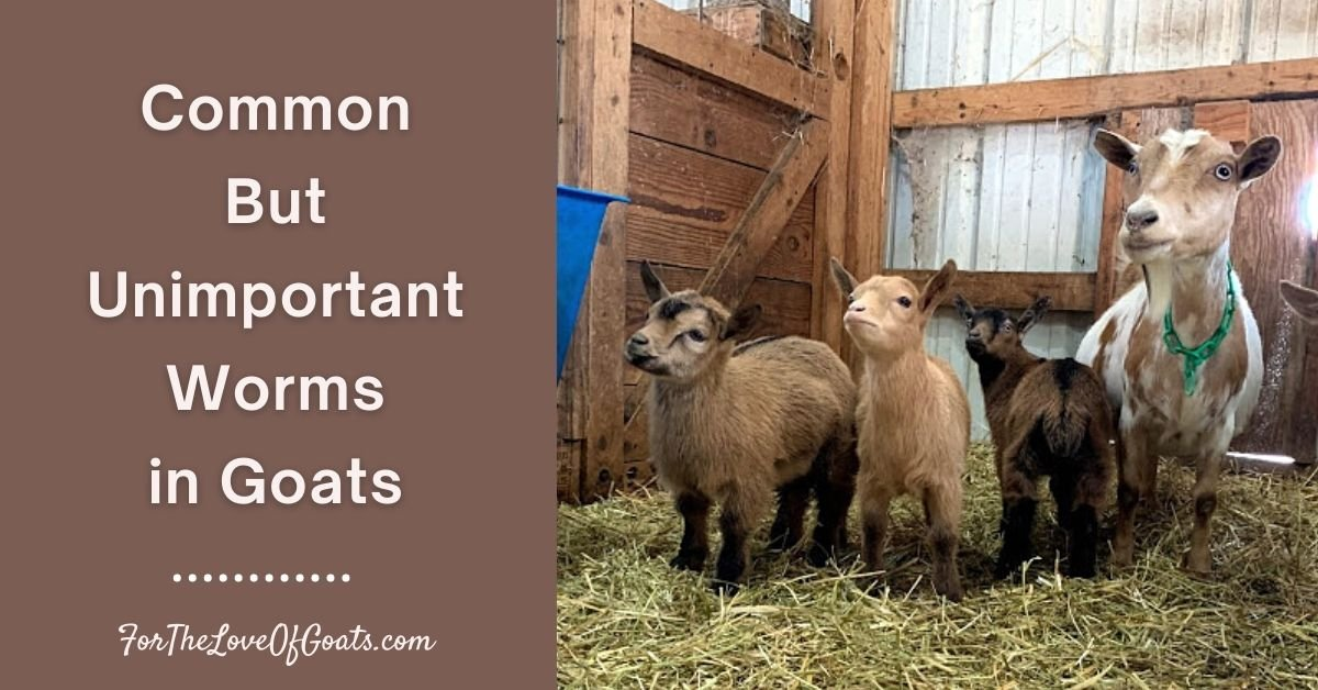 Common But Unimportant Worms in Goats