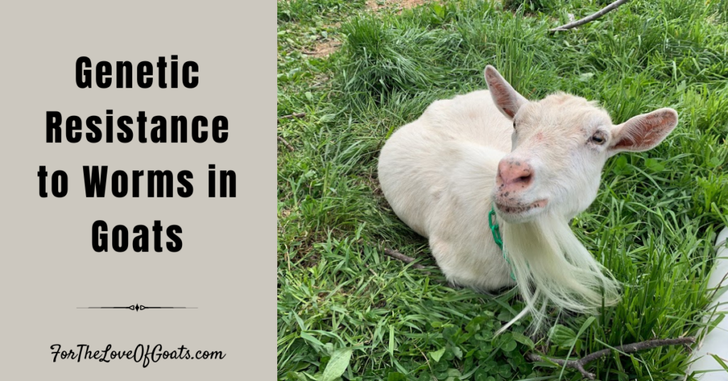 Genetic Resistance to Worms in Goats