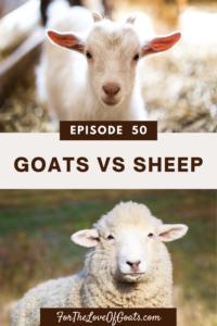 Goats vs Sheep