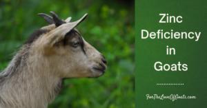 Zinc Deficiency in Goats