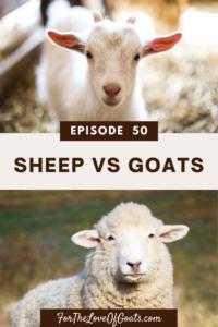 Sheep vs Goats