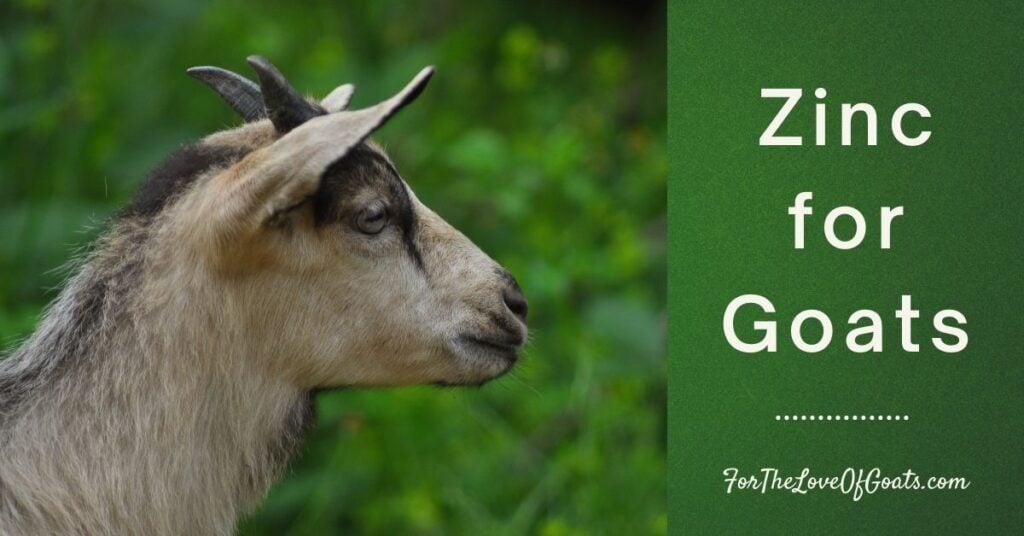 Zinc for Goats