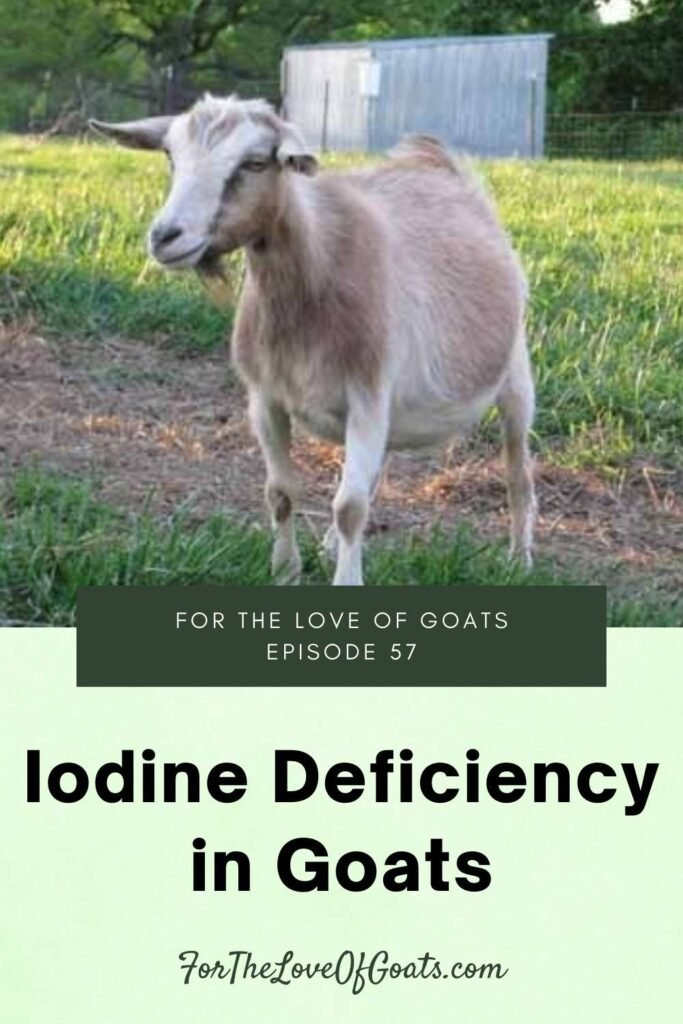 Iodine Deficiency in Goats