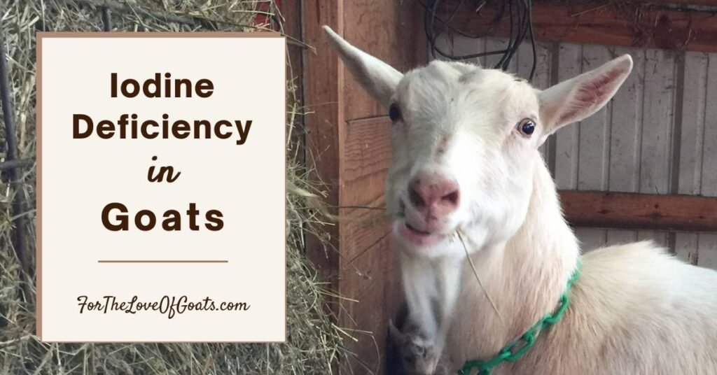 Iodine Deficiency in Goats title graphic