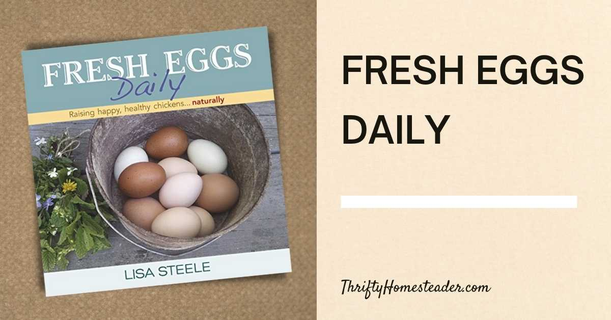fresh eggs daily